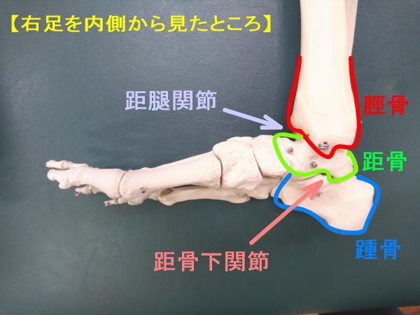 右足を内側から見る