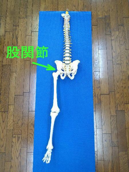股関節の全体像